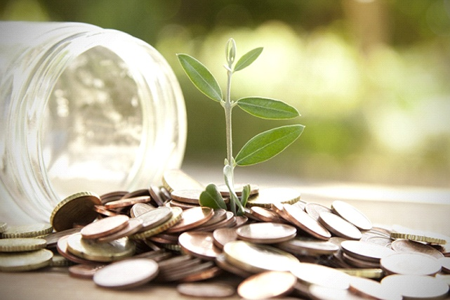 plant sprouting from money